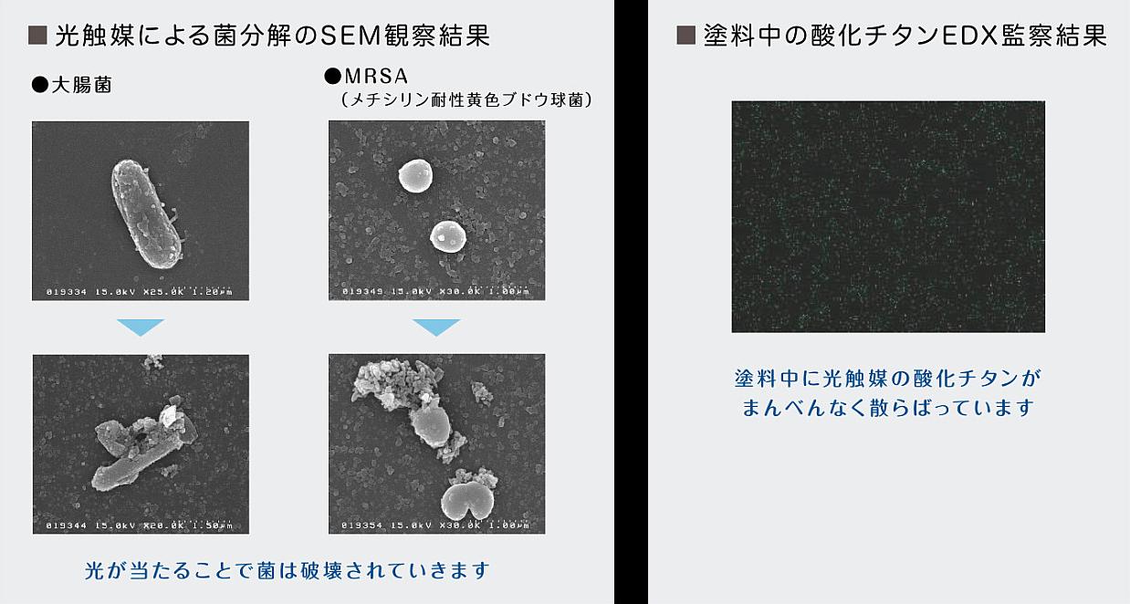 光触媒による菌分解のSEM観察結果